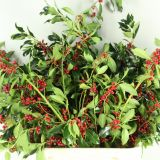 Hulst Rode Bes/ Holly Red Berry